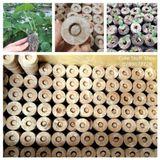 50 Viên nén mụn dừa ươm hạt giống chất lượng cao kích thước nở chuẩn lớn 65mm 70mm